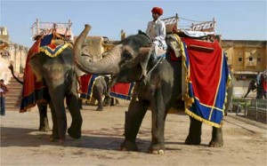 Amer Fort- Elephant ride